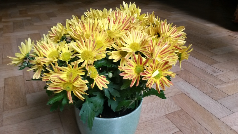 flowers for 9th October 2016